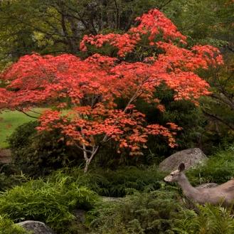 Enchanted Garden_0291